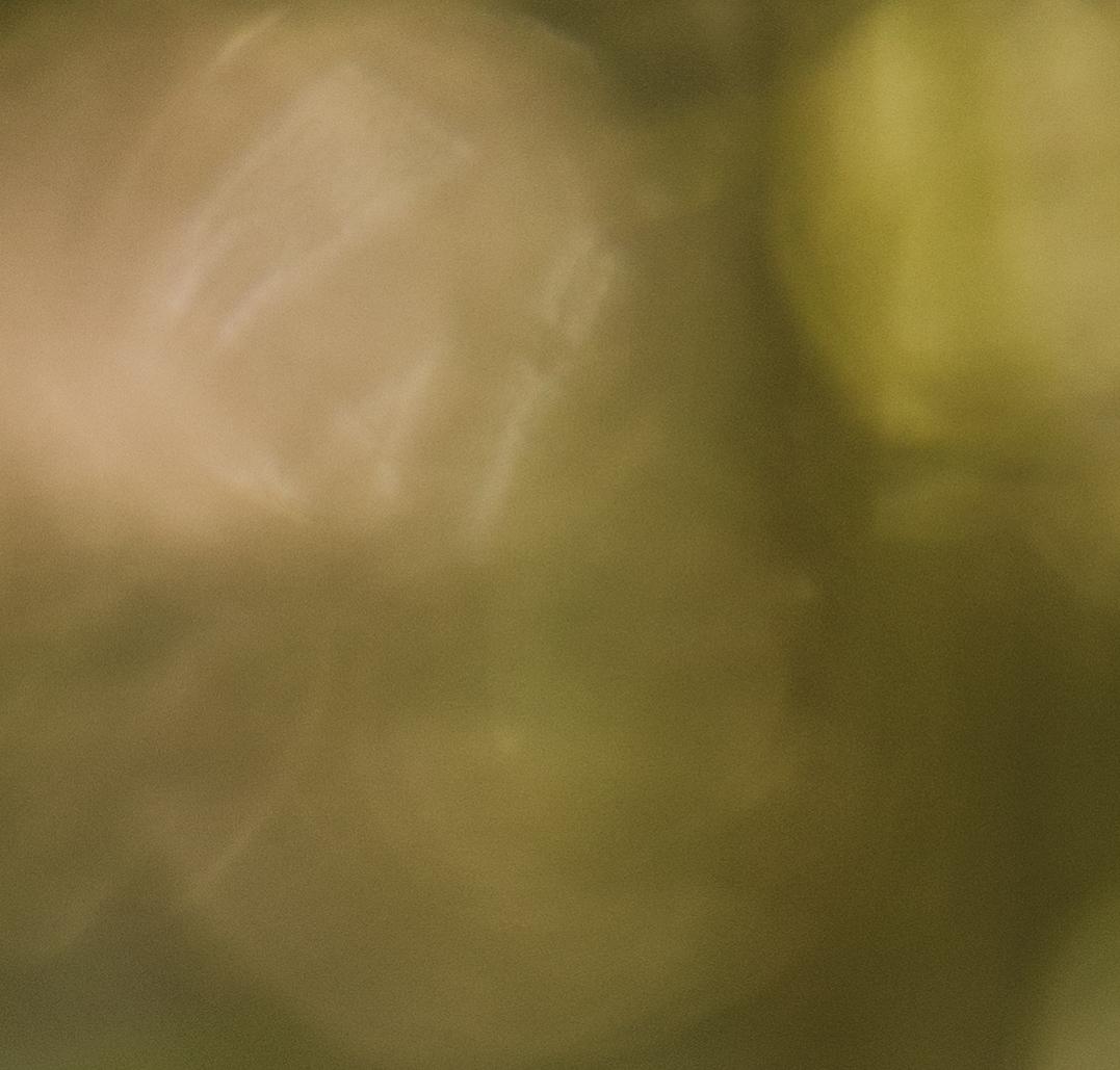 Fjellsikt.no Fjellvett Fjellvettregler Fjellvettreglene Canon 5D Mark V Sigma Landskap Natur Telemark fjellsikt RondaneGaustatoppen Gausta Haukeli Nupstjørna Gaustablikk Bondal Bondalsbreen Bondhusvatnet Folgefonna Mølen Makro Sommer Landskap Beste sommer bildene